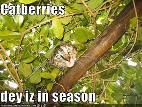 Catberries  dey iz in season