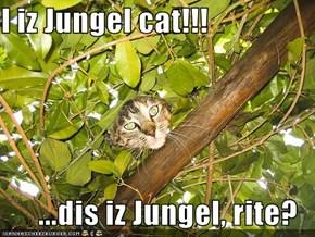 I iz Jungel cat!!!  ...dis iz Jungel, rite?
