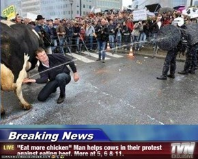"Breaking News - ""Eat more chicken"" Man helps cows in their protest against eating beef. More at 5, 6 & 11."