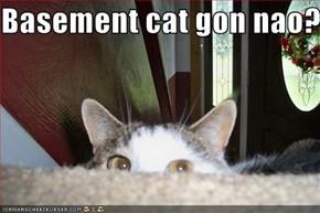Basement cat gon nao?