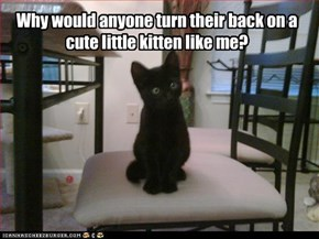 Why would anyone turn their back on a cute little kitten like me?