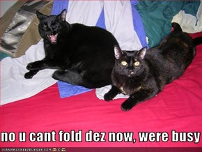 no u cant fold dez now, were busy