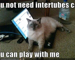 u not need intertubes cats  u can play with me