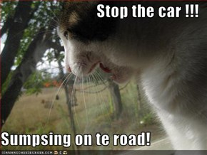 Stop the car !!!  Sumpsing on te road!