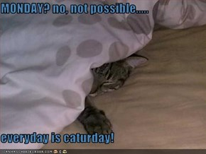 MONDAY? no, not possible.....  everyday is caturday!