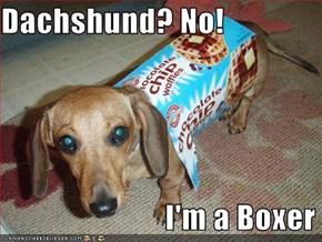 Dachshund? No!                             I'm a Boxer