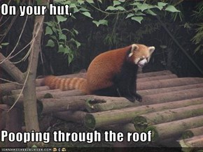 On your hut,  Pooping through the roof