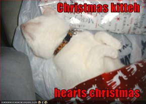 Christmas kitteh  hearts christmas