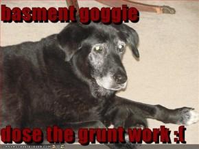 basment goggie  dose the grunt work :(