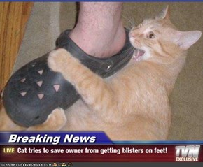 Breaking News - Cat tries to save owner from getting blisters on feet!