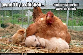 pwned by a chicken...