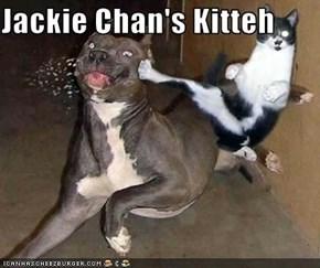 Jackie Chan's Kitteh