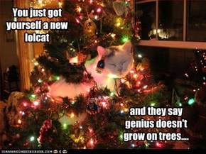 You just got yourself a new lolcat
