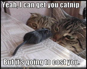 Yeah, I can get you catnip.  But it's going to cost you.