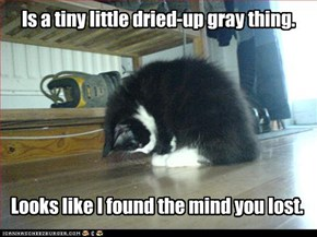 Is a tiny little dried-up gray thing.