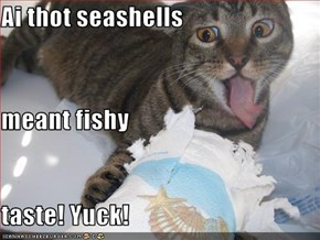 Ai thot seashells meant fishy  taste! Yuck!