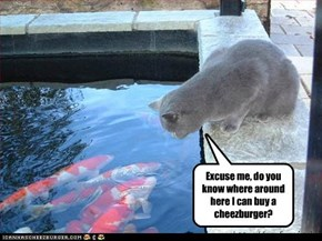 Excuse me, do you know where around here I can buy a cheezburger?