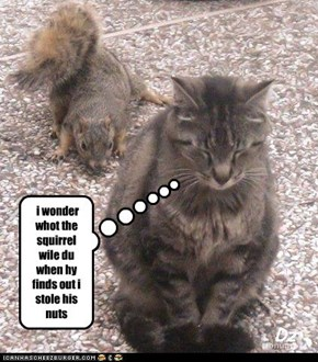 i wonder whot the squirrel wile du when hy finds out i stole his nuts
