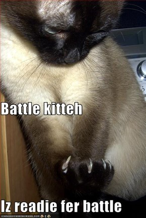 Battle kitteh Iz readie fer battle