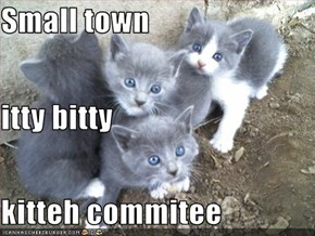 Small town  itty bitty  kitteh commitee