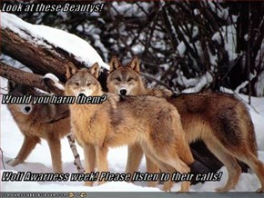 Look at these Beautys! Would you harm them? Wolf Awarness week! Please listen to their calls!