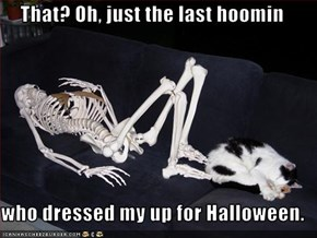 That? Oh, just the last hoomin  who dressed my up for Halloween.