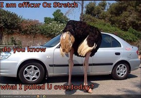 I am officur Oz Stretch   do you know whai I pulled U over today?