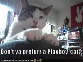 Don't ya prefurr a Playboy-cat?
