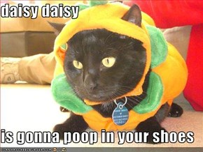 daisy daisy  is gonna poop in your shoes