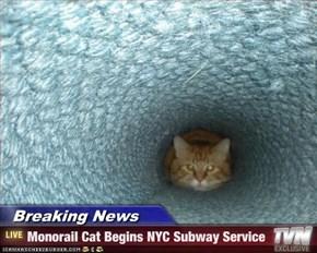 Breaking News      - Monorail Cat Begins NYC Subway Service