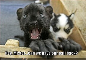 Hey, Mister...Can we have our ball back?