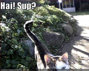 Hai! Sup?