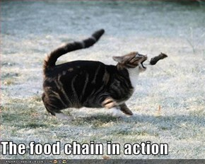 The food chain in action