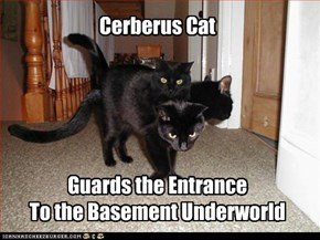 Cerberus Cat      Guards the Entrance To the Basement Underworld