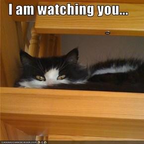 I am watching you...