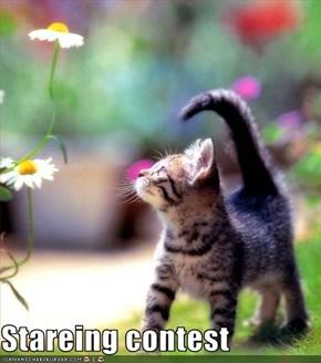Stareing contest