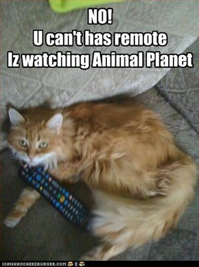 NO! U can't has remote Iz watching Animal Planet