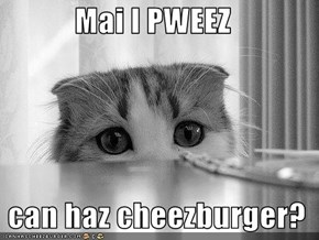 Mai I PWEEZ    can haz cheezburger?