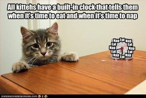 All kittehs have a built-in clock that tells them when it's time to eat and when it's time to nap