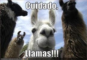 Cuidado,  Llamas!!!