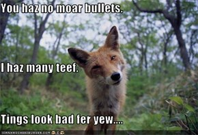 You haz no moar bullets. I haz many teef. Tings look bad fer yew....