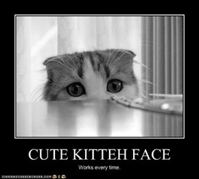 CUTE KITTEH FACE