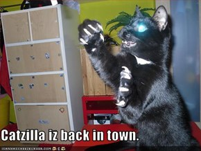 Catzilla iz back in town.