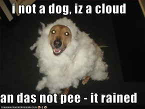 i not a dog, iz a cloud  an das not pee - it rained