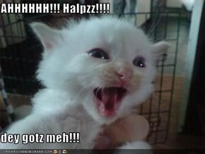 AHHHHHH!!! Halpzz!!!!  dey gotz meh!!!