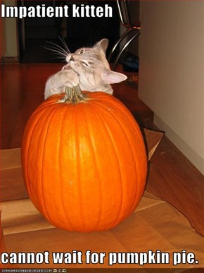 Impatient kitteh  cannot wait for pumpkin pie.