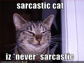sarcastic cat  iz *never* sarcastic