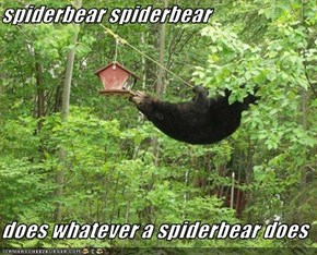 spiderbear spiderbear  does whatever a spiderbear does