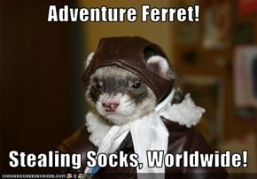 Adventure Ferret!     Stealing Socks, Worldwide!