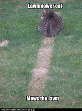 Lawnmower cat